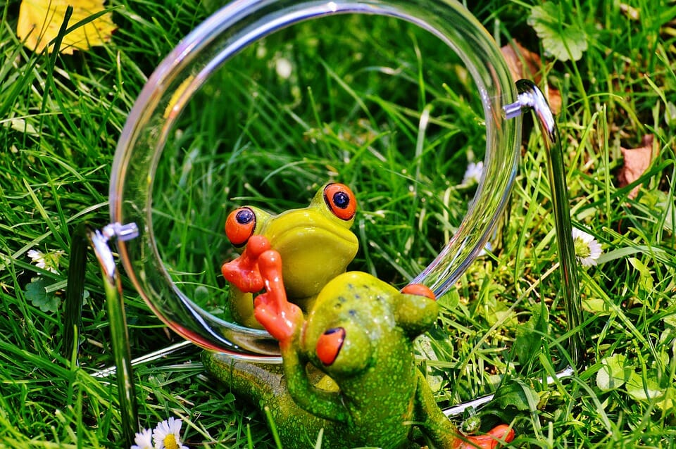 A frog rehearsing in front of a mirror